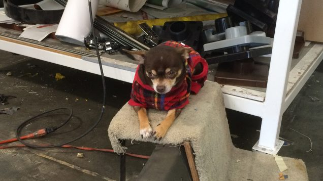 Our Killer Shop Dog
