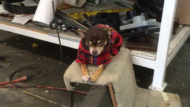 Our Killer Shop Dog